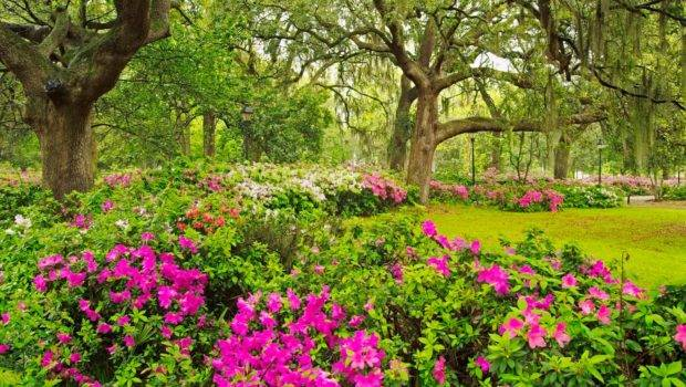 Beautiful Flower Garden Forest Cool Wonderful
