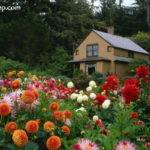 Beautiful Flower Gardens Photos Garden Picturess Xemanhdep