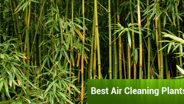 Best Air Cleaning Plants Your Home Sunrise