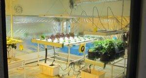 Building Your Own Indoor Grow Room Part Hydroponics Blog