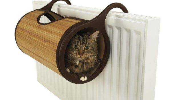 Cat Furniture Creative Design Why Evolution True