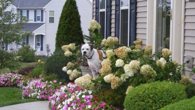 Cheap Inexpensive Landscaping Ideas Front Yard