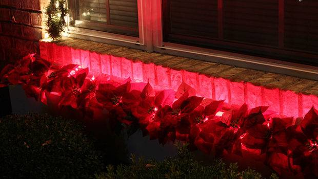 Check Out Those Glowing Red Poinsettias Santa Definitely Able