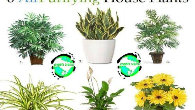 Clean Air Plants Your Home