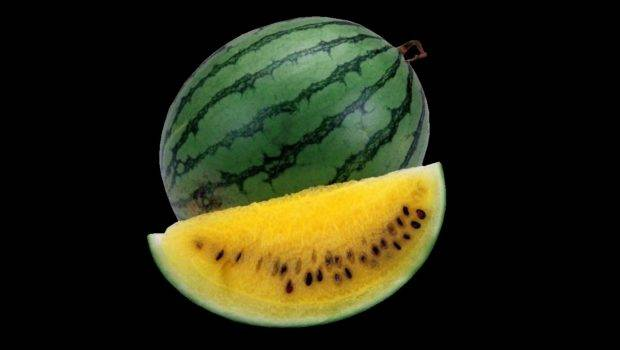 Cloning Melons Pros Cons Forwallpaper