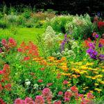 Colorful Beautiful Flower Garden