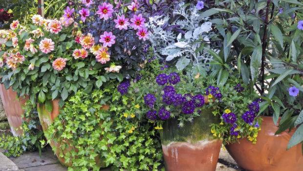 Container Garden Placement Learn Plant