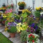 Container Gardening Simple House Design Ideas
