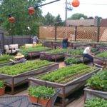 Cool Environment Friendly Ideas Your Rooftop