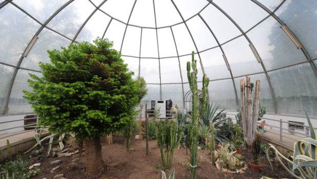 Cool Greenhouse Ideas Year Round Interior