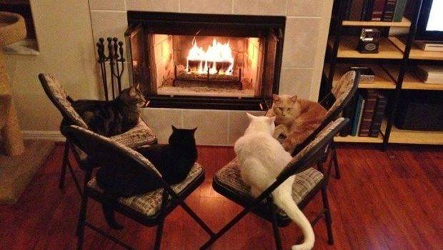 Cozy Cats Fire