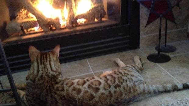 Cozy Fire Cat Warming Sight Pinterest