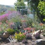 Drought Resistant Native Landscape Tolerant Pinterest