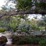Drought Tolerant Landscape Using Palms Bromeliads
