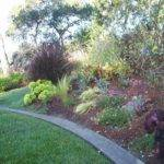 Drought Tolerant Landscaping Zone