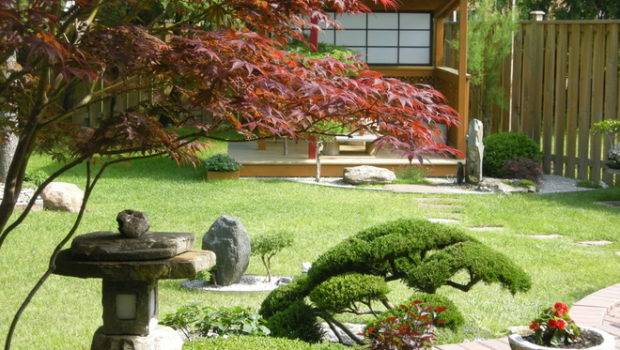 Evergreen Shrubs Over Arched Japanese Maple Love Lantern