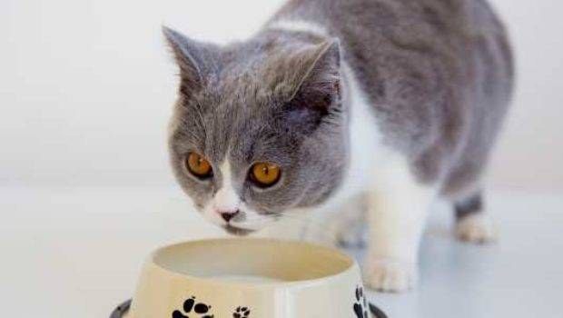 Feeding Raw Food Cats Pros Cons Pets Homes