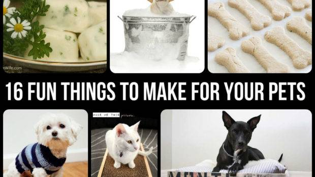 Fun Things Make Your Pets