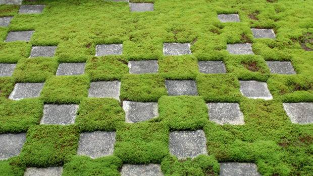 Ground Cover Ideas Lomets
