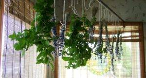 Hanging House Plants Photos