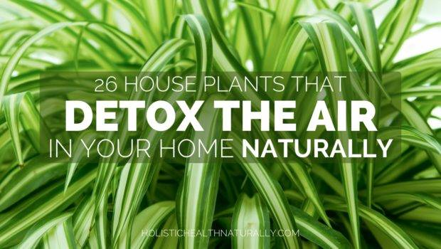House Plants Detox Air Your Home Naturally