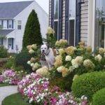 Ideas Your Back Front Yard Landscaping