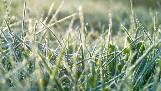 Lawn Care Winter Your Grass Prepared Spring