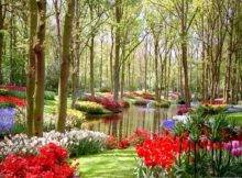 Mailing Some Great Lanscapes Flower Garden Sceneries