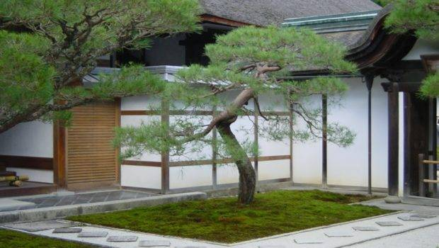 Minimalist Japanese Garden Design Mossy Land Exotic Native