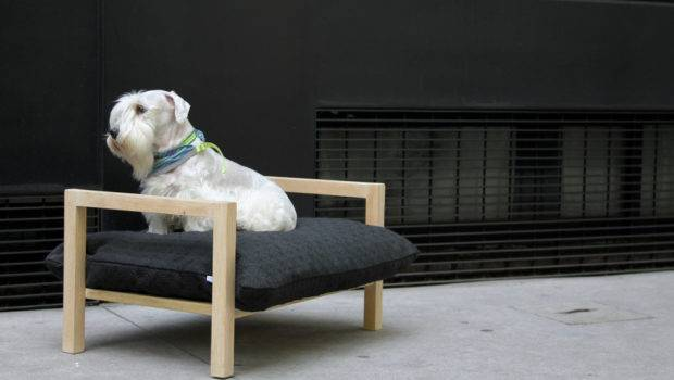 Modern Elevated Dog Bed Hat Design Milk