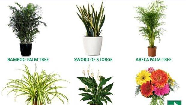 Natural Air Purifiers Your Home