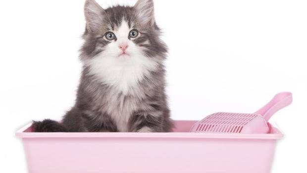 Nuvet Labs Pros Cons Teaching Your Cat Toilet