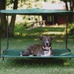 Outdoor Large Dog Bed Canopy Raised Pellos Pinterest