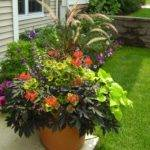 Pro Tips Successful Container Gardening