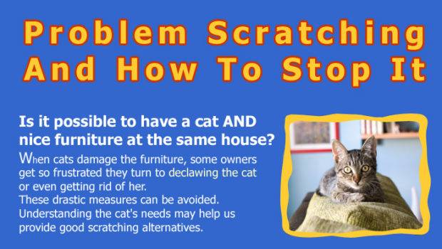 Pros Cons Declawing Cats Hrf