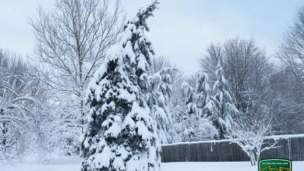 Protect Your Ottawa Lawn Damage Winter Care