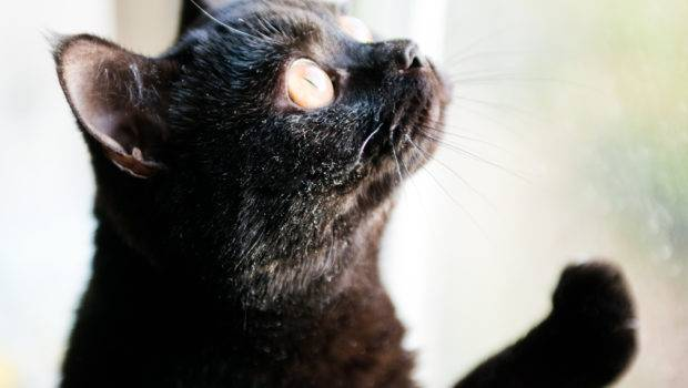 Should Your Cat Stay Inside Out Petstayadvisor