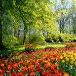 Sun Shines Beautiful Flower Garden