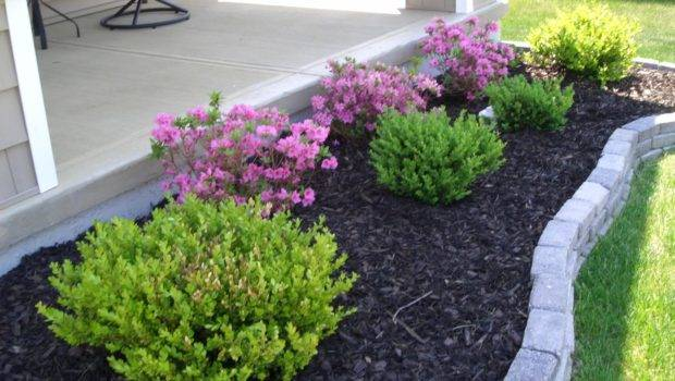 Trying Find Perfect Landscaping Plants Landscape Plant