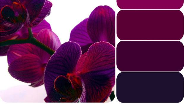 Wedding Color Palette Purple Pink Sweet Lovely Life