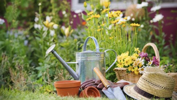 Why Gardening Good Your Health