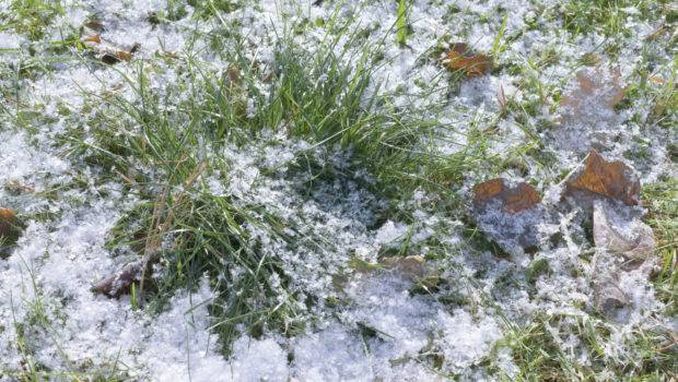 Winter Lawn Care Take Grass
