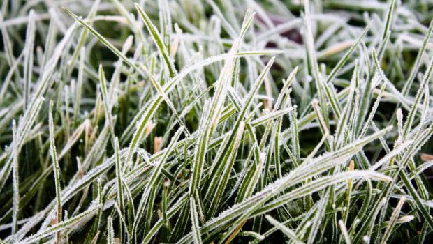 Winter Lawn Care Tips Lawncare