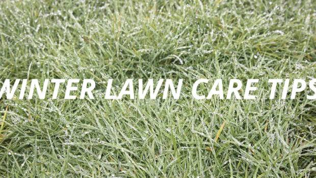 Winter Lawn Care Your Grass Prepared Spring