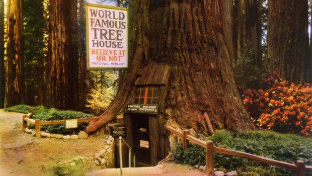 World Famous Tree House Park Redwood Highway