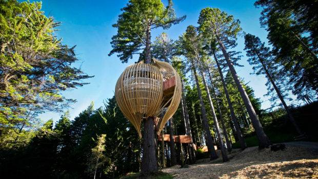 Yellow Treehouse Restaurant Pacific Environments Archdaily